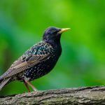 Gratis Cursus Vogels Herkennen